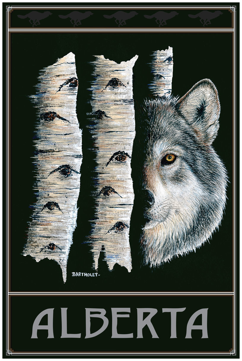 Alberta Canada Shadow Dancer Drawing & Painting Wolf Giclee Art Print Poster by Dave Bartholet