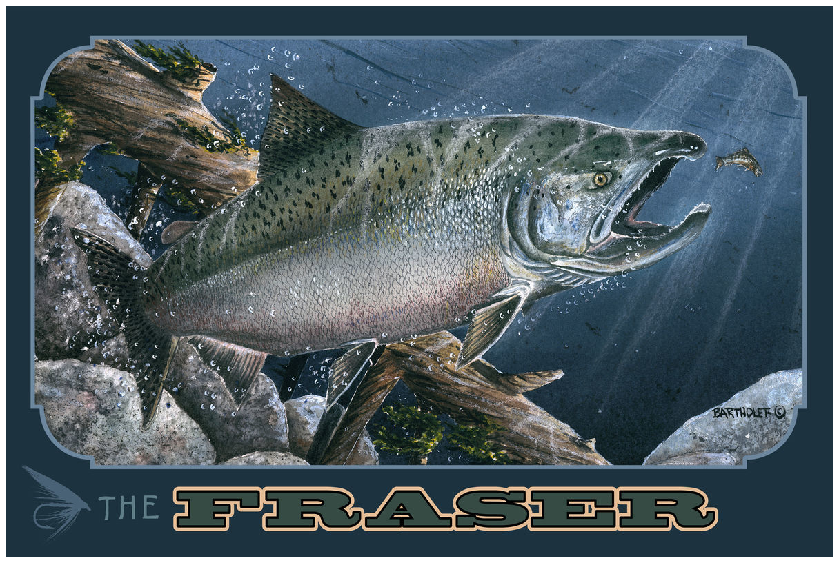 The Fraser Canada Salmon Drawing & Painting Salmon Giclee Art Print Poster by Dave Bartholet