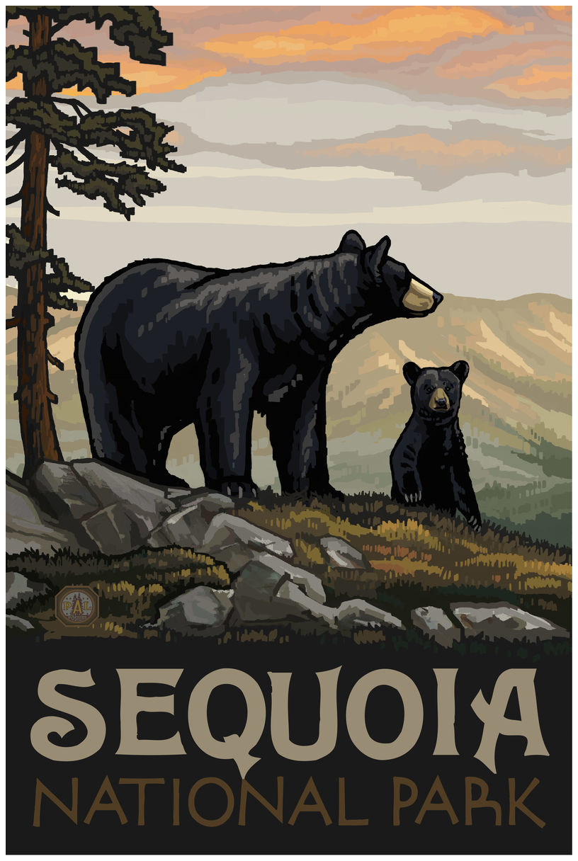 Sequoia National Park Black Bear Family Giclee Art Print Poster by Paul A. Lanquist
