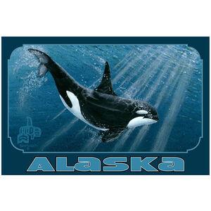 Alaska Orca Single