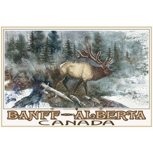 Banff Alberta Canada Elk