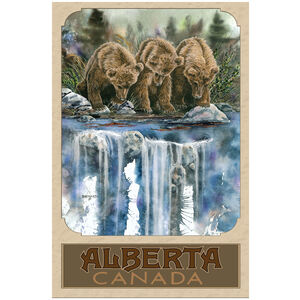 Alberta Canada Grizzly Bears