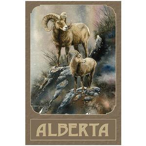 Alberta Canada Bighorn Sheep