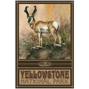 Desert Ghost Antelope Yellowstone National Park Wyoming