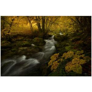Autumnal Symphony