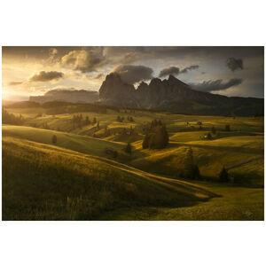 Morning Meadows