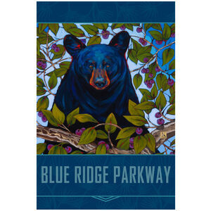 Blue Ridge Parkway Berry Bear