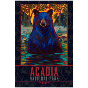 Acadia Bathing Black Bear