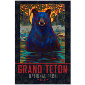 Grand Teton National Park Black Bear