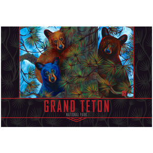 Grand Teton National Park Black Bear Trio