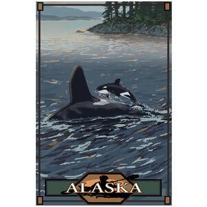 Alaska Baby Orca Jumping