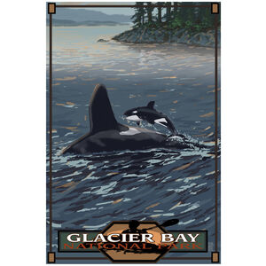 Glacier Bay National Park Baby Orca Jumping Forest