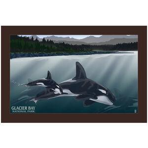 Glacier Bay National Park Orca Pod Alaska