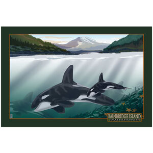 Bainbridge Island Washington Orcas