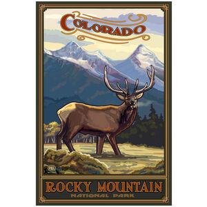 Colorado Elk, Rocky Mountain National Park
