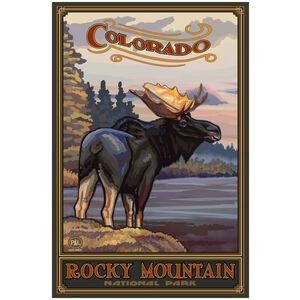 Colorado Moose Rocky Mountain National Park