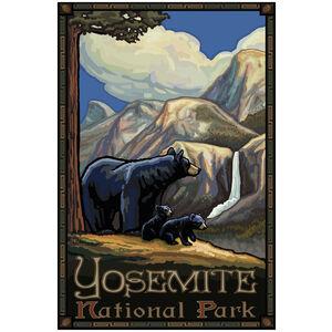 Yosemite National Park Black Bear and Cubs