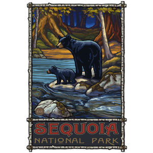 Sequoia National Park Bears In Stream