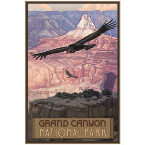 Grand Canyon National Park Condor