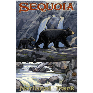 Sequoia National Park Bear On Log