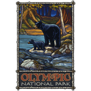 Olympic National Park Bears In Stream