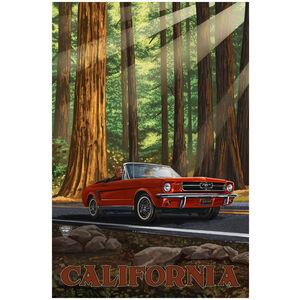 California Mustang In Redwoods