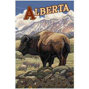 Alberta Canada Bison Herd