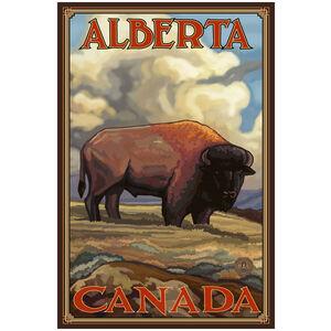 Alberta Canada Bison