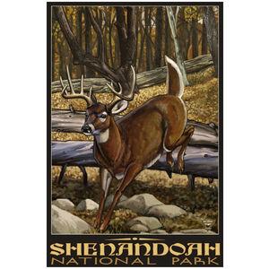 Shenandoah National Park Whitetail Deer No Hunter