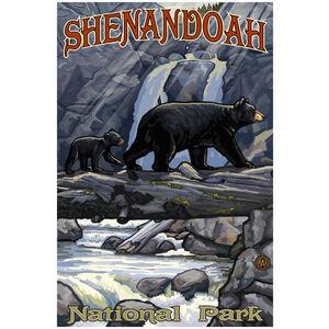 Shenandoah National Park Bear On Log Hills