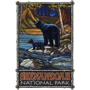 Shenandoah National Park Bears In Stream
