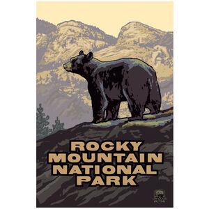 Rocky Mountain National Park Black Bear