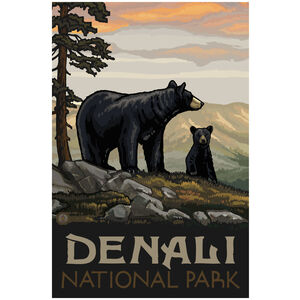 Denali National Park Black Bear Family
