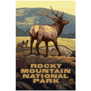 Rocky Mountain National Park Elk Herd