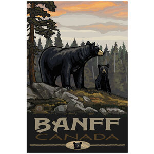 Banff Canada Black Bear Family Forest