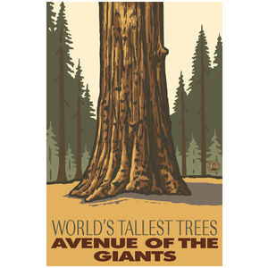 Avenue of the Giants Worlds Tallest Redwoods