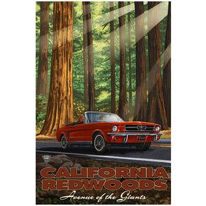 Calfornia Redwood Mustang