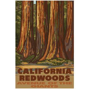 California Redwoods Avenue of the Giants