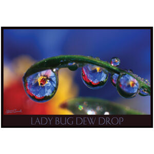 Lady Bug Dew Drop